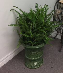 5 Green Glazed Urn Planters in Excellent Condition