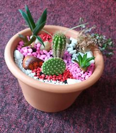 Cactus Succulent Rock Garden