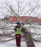 Tree Maintenance - Free Quotes - ISA Certified Arborists
