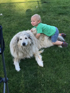 Great Family Dog needing a new home
