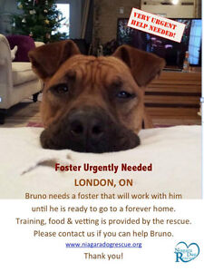 Bruno is a handsome 3 yr old mix breed who needs a hero