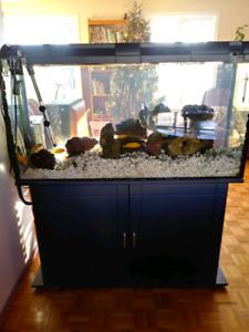Aquarium 90 gallons