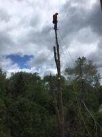 Southern Ontario Tree Specialists serving Niagara region