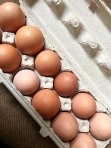 Fertile eggs from healthy hens!