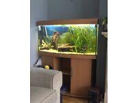 Juwel 260ltr bow fronted aquarium