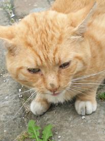FOUND CAT