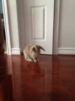 Care needed for Bonded rabbits