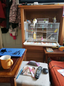 Large cage  with bonded pair of cockatiels