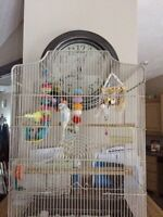 3 budgies with cage