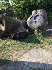 Tree stump / wood