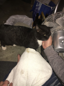 Black cat found in South Surrey - 14th Ave & King George