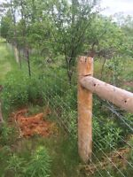 Horse, paddock, dog, property fencing