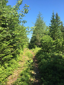 76 Acres of land for sale! Musquodoboit Harbour