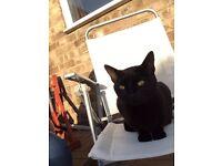 Black cat (female)