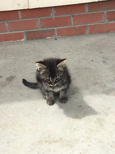 Four Kittens Need New Homes