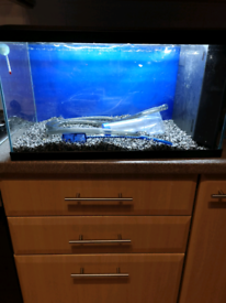 54 litres Fish tank