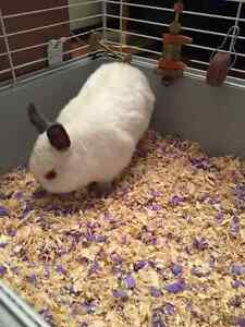 White bunny with cage and bed