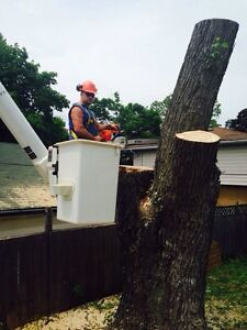 Tree removals, storm clean up , pruning, and felling of trees Cambridge Kitchener Area image 6