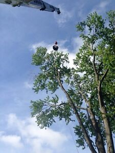 Tree removals, storm clean up , pruning, and felling of trees Cambridge Kitchener Area image 5