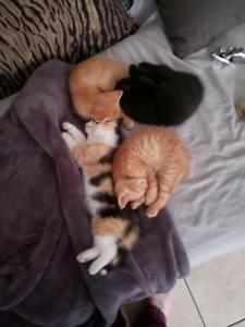 Family oriented kittens