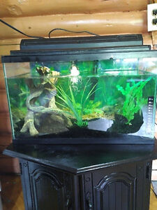 10gallon tank with fish and decorations