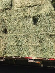 1st cut premium grass/alfalfa mix hay