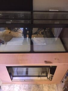 125 gallon saltwater reef tank system, NEW PRICE!!!  Kitchener / Waterloo Kitchener Area image 2
