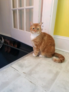 Cats for a new home 2 years old Male and female...great cats
