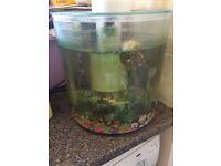 Two fish tanks and fish