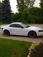 White mustang LOW KMS