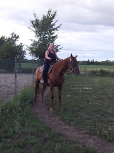 great chestnut horse for sale
