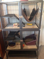 Ferrets with Cage/Accessories