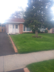 1 bedroom basement apartment. In Brampton available for may 1