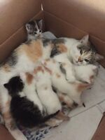 7 kittens ready to go