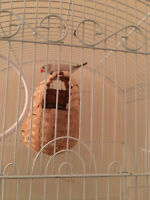 two finches for sale with cage and nest and one month food suppl