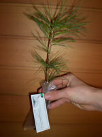 TREE SEEDLINGS for give-a-ways