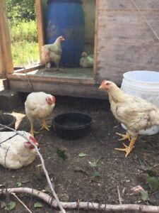 Équipement d'élevage pour petits animaux