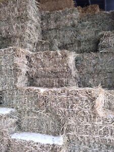 Small square grass hay bales