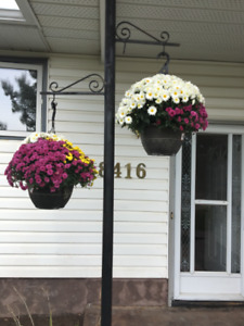COMPLETELY RENOVATED 3 BDRM HOME FOR 1/2 THE COST OF A VAN CONDO