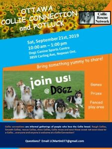 Collie Connection -September 21st