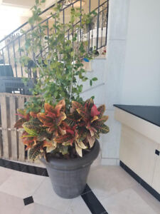 Large Plants - Free (FIRST COME FIRST SERVE)