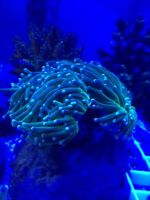 Quality Reef - Saltwater supplies and Corals for sale