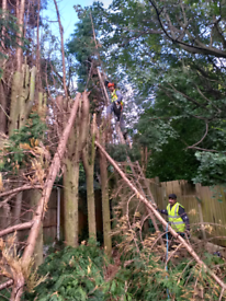 Tree services 🌳 and garden maintenance.RUBBISH REMOVAL
