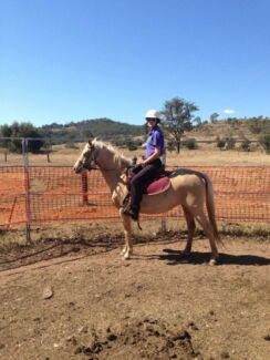 6 year old 13.2hh unregistered mare Hatton Vale Lockyer Valley Preview