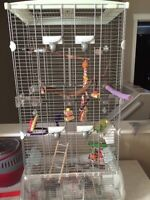 Young male budgie, cage, gym, carrier and more