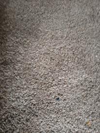 Living Room carpet 32sq mts
