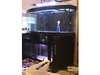 5 foot marine tank Jewel vision bow front tank.
