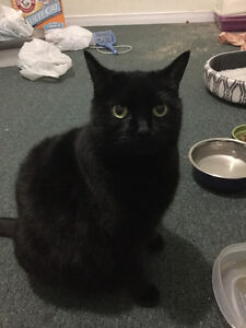 Lovely kitten looking for a new home! For free