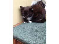 2 kittens left