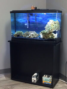 Brand New (Only used a month in office) 23 Gallon Fish Tank